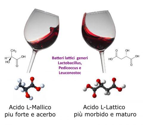 Cos'è e perché si fa la fermentazione malolattica