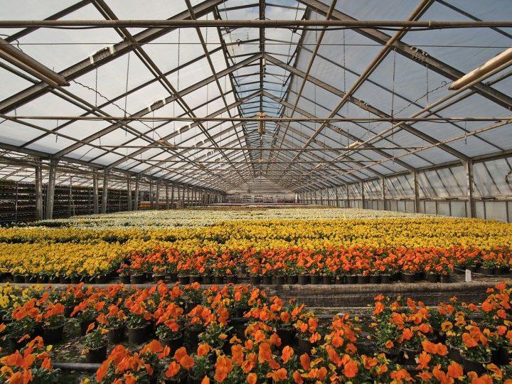 Riscaldamento serre agricole: tipi e metodi