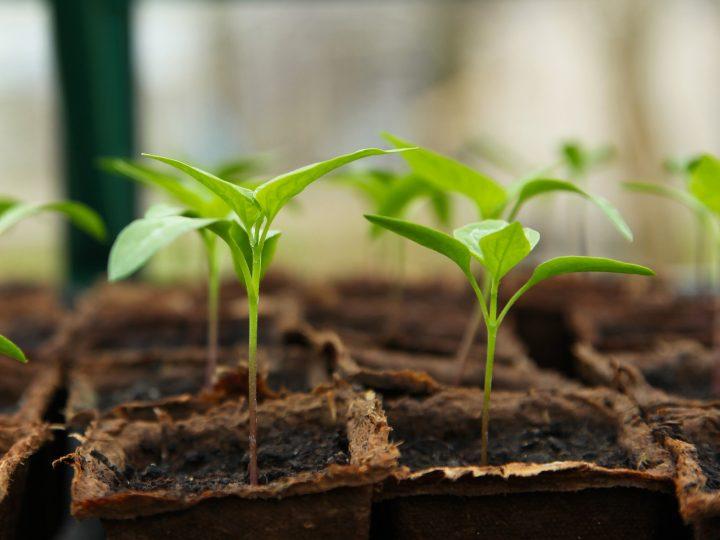 Vantaggi del riscaldamento nella germinazione dei semi